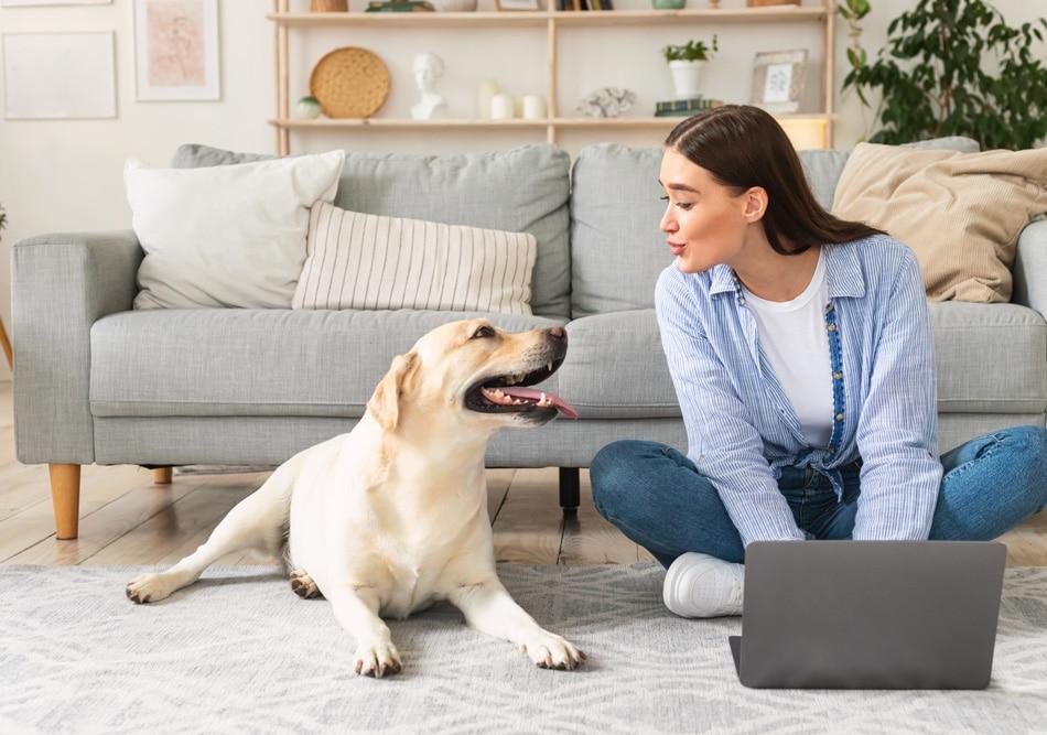 Mensch-Tier-Beziehungen und tiergestützte Arbeit